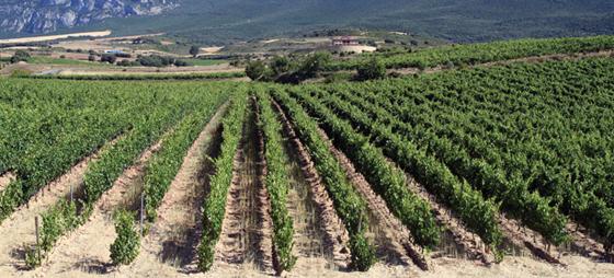 Middelalderbyen Laguardia i Rioja Alavesa