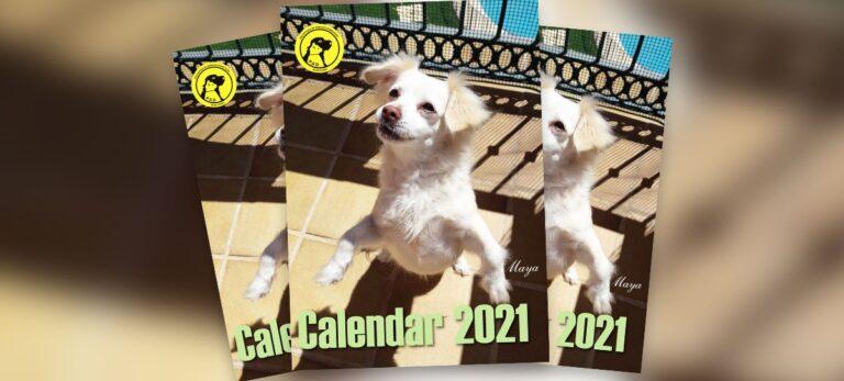 Den nye P.A.D. kalender er nu færdig, så bliv klar til 2021 og hjælp dyrene på samme tid!