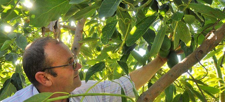 Sabor a Málaga: Avokado