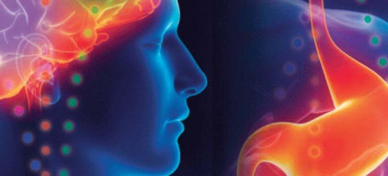 BodyTalk – om hjerne-maveforbindelsen