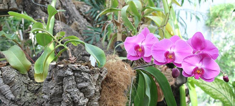 Besøg Europas største orchidarium i Estepona