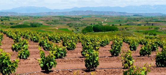 La Rioja – hvor druer bliver til vidunderlige vine