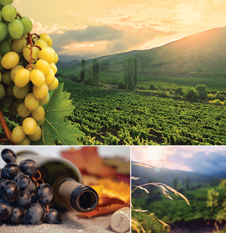 Vinos & Gourmet maj 2016