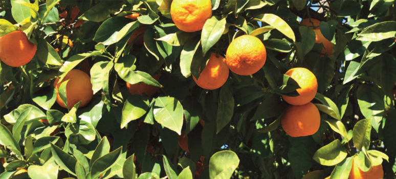 Appelsin 3