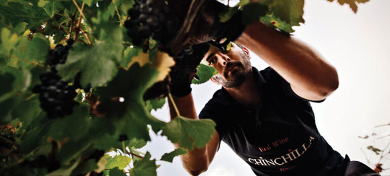 Sabor a Málaga: Verdensklasse-rødvin fra Rondas bjerge