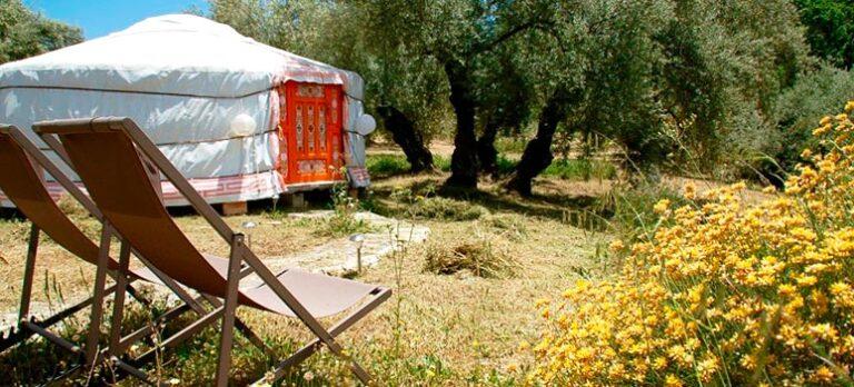 Glamping i olivenland