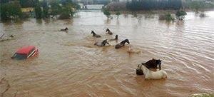stormflod3