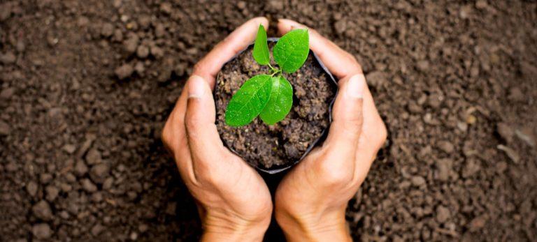 En voksende glæde - 10 grunde til at plante et træ
