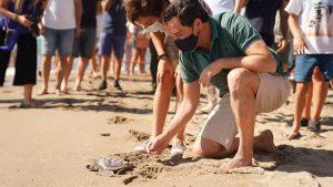Skildpadder frigivet i havet ved Los Boliches