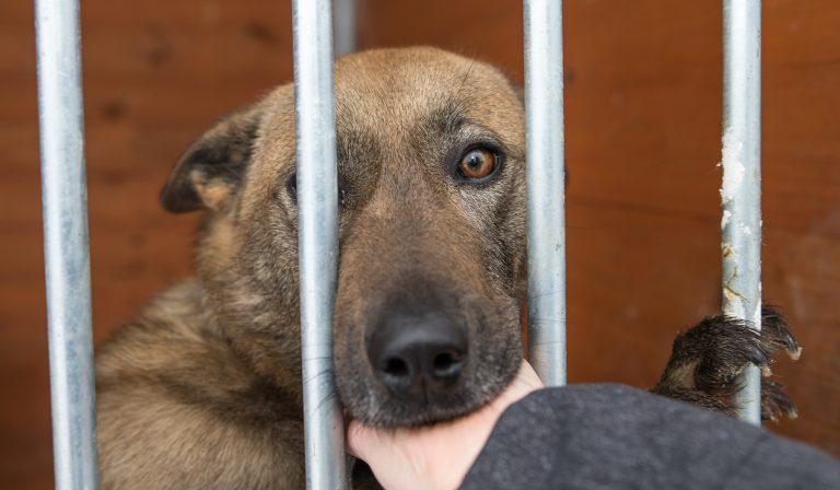 Hver time efterlades 15 hunde uden en mikrochip i Spanien