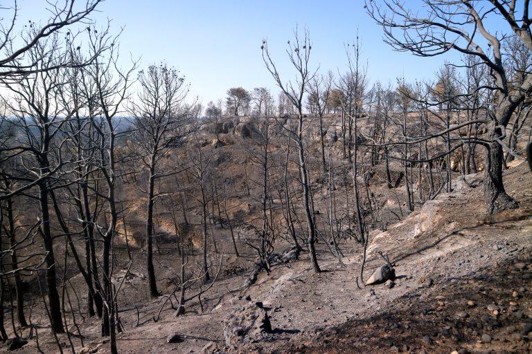 Branden stadig aktiv i Sierra Bermeja